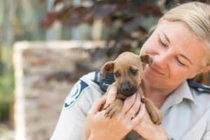 RSPCA Using Tech for Animal Wellbeing
